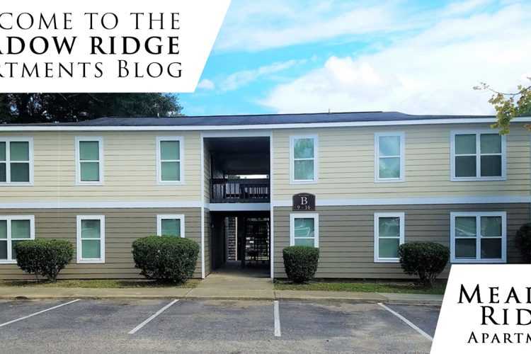 Welcome to the Meadow Ridge Apartments Blog