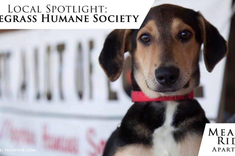 Local Spotlight: Wiregrass Humane Society